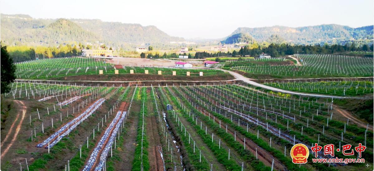 巴州区鼎山镇白果村海升猕猴桃产业园区